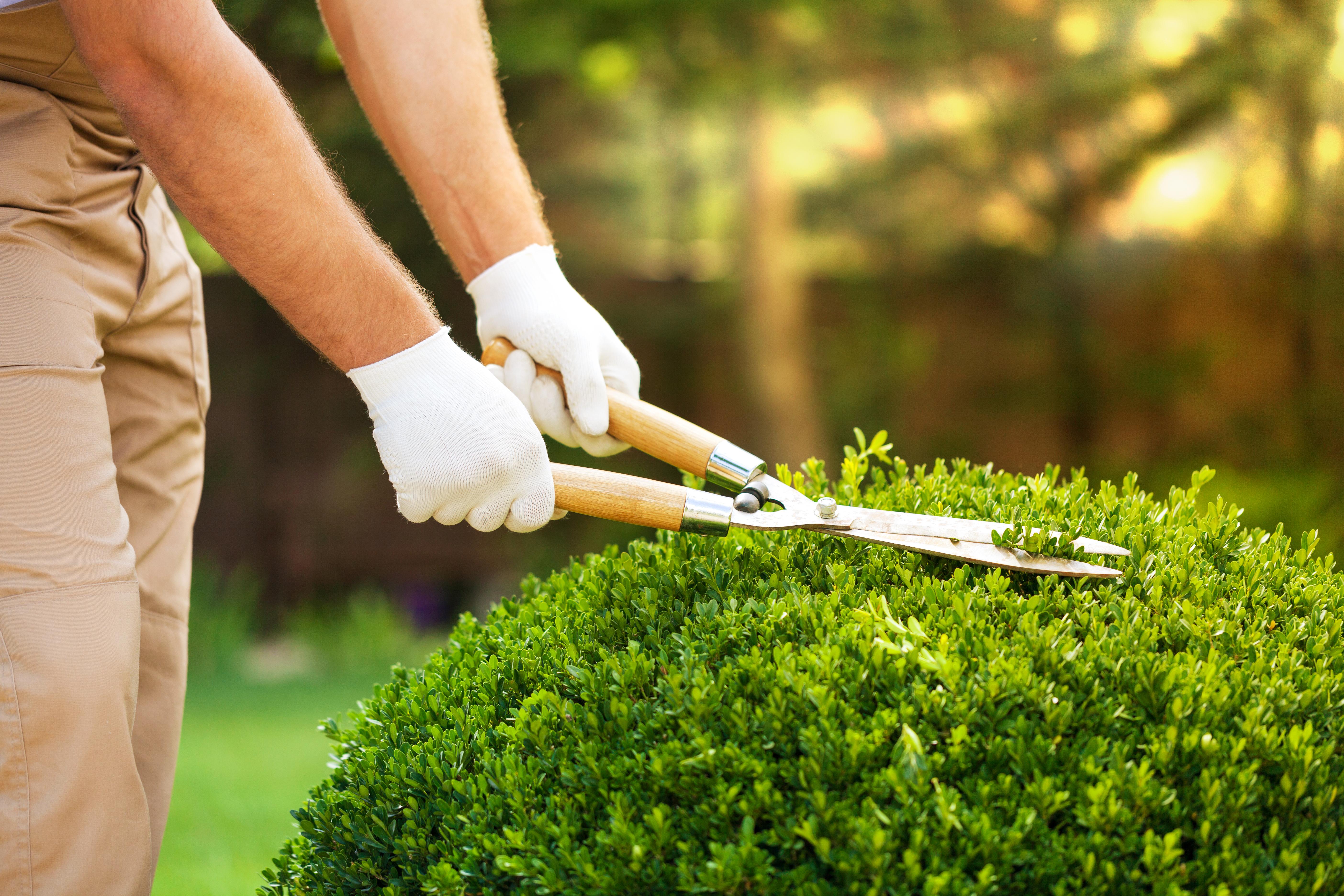 Manutenzione Giardini Milano E Provincia manutenzione giardini verona e provincia | impresa di